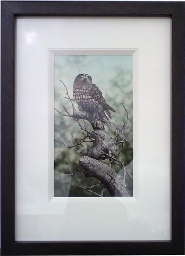 Paul Margoscy - Owl framed with timber slip.
